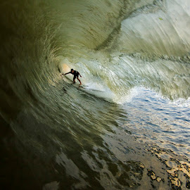 Sammy Giant Closeout by Dave Nilsen - Sports & Fitness Surfing
