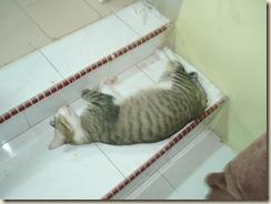 aksi kucing 090
