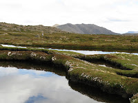 Cushion plants. ponds and Florentine Peak Photo