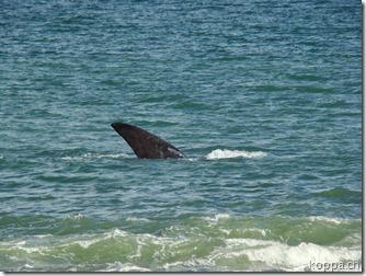 101031 Playa Doradilla (15)