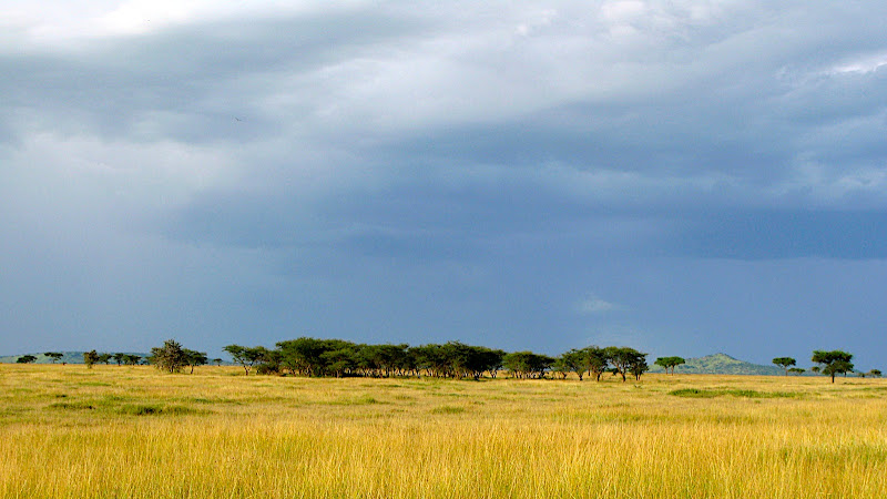 Singita Grumeti Reserves - a vast landscape.