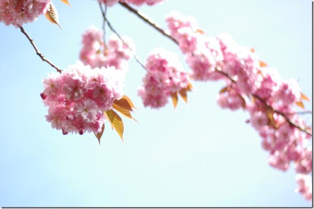 Sunny Spring 068