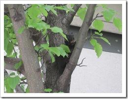 Toronto GTG (June 11-14, 2009) 289