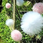 Pom Pom Pricess May Option 2