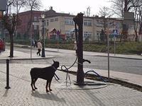 kaevuvalvur, Czarnków [29.03.2010 10:49 (GMT +2)]