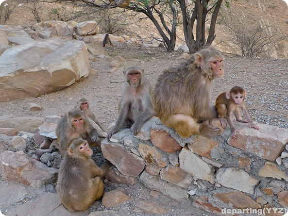 Monkey in Monkey Family Not Very Happy, Jaipur (India)-1070687