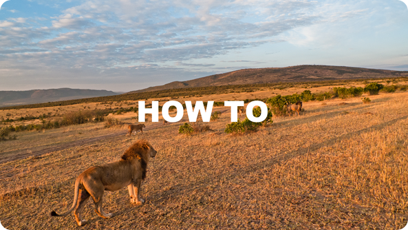 Lions in the Masai Mara (Kenya)(HOW TO)