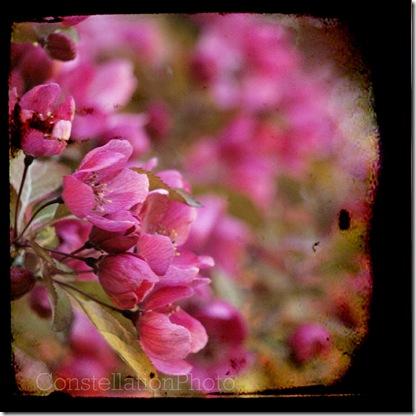 Flowers3-copy