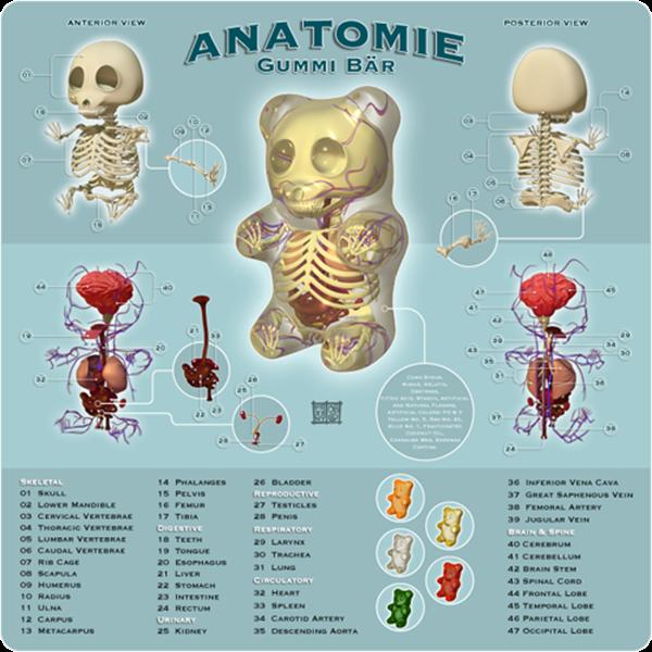 anatomie_gummi_bar_by_freeny