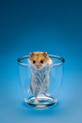 Glass of Hamster