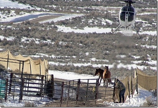 Antelope01-23-2011 032 (2)
