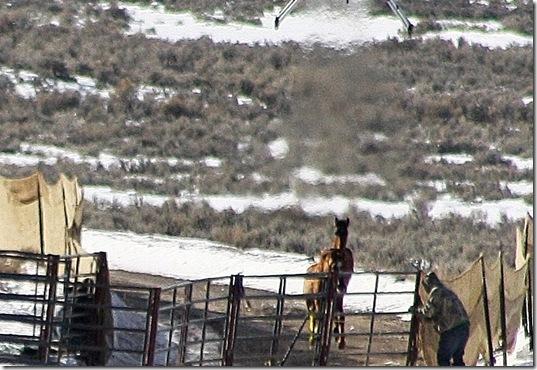 Antelope01-23-2011 035 (2)