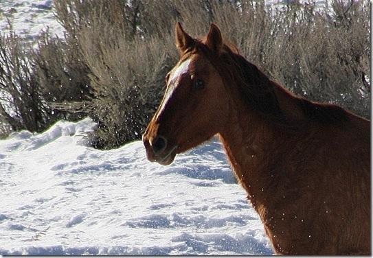 Antelope01-23-2011 103 (2)