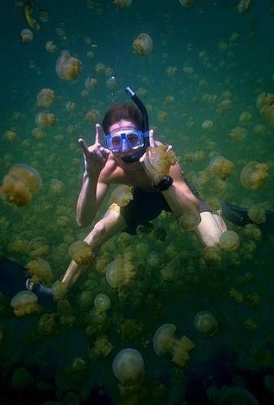 palau 06 Swim among thousands of Jellyfish