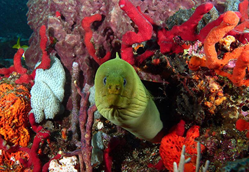 aquarium%20contest2 Mote Aquarium Reef Photo Contest