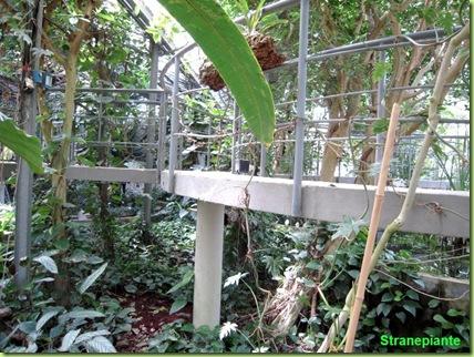 interno serra tropicale orto botanico roma