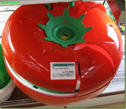 pomodoro idroponica