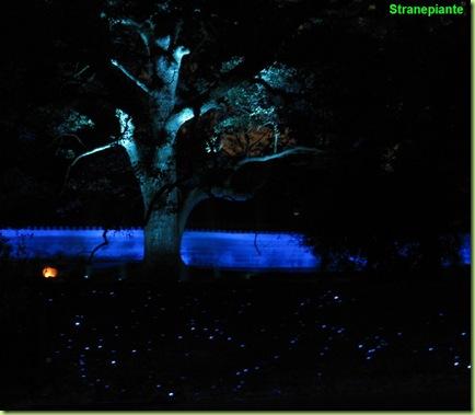 luci blu
