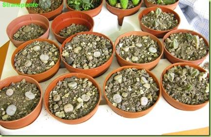 rinvaso-semenziali-terminato