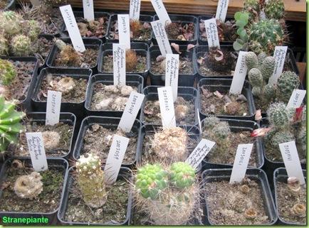 mix morti hortus botanicus amsterdam