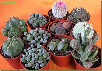 mix-acquisti-cactus-amsterdam