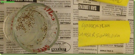 disinfezione semi Gymnocalycium