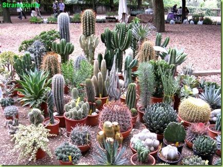 cactus vendita neve