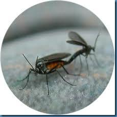 lovebugs3