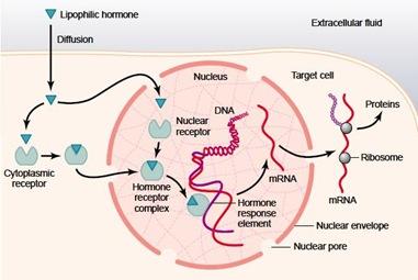 Reseptor intrasel