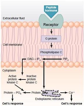 Fosfatidilinisitol