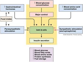 Regulasi pankreas