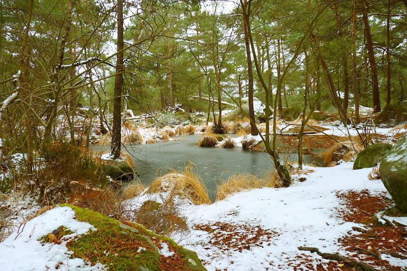 Forêt de FONTAINEBLEAU Mare%20de%20Bouligny
