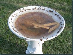 Florida Hives 004