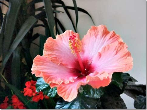 gallnas_flower-2010-01W_sma