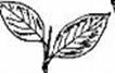 two leaves UGDP