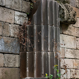 New Life by Jennifer Bacon - Buildings & Architecture Decaying & Abandoned ( old, brick, weed, column, grey, decaying, abandoned )