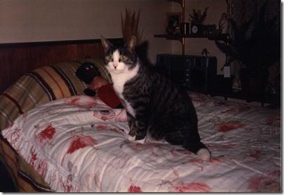 Golly & Pussycat 1984
