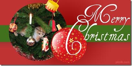 Joey in Tree - Christmas Header idea