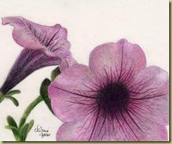 Petunia Grisaille2