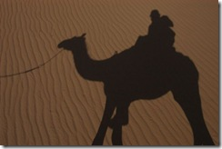 Camel shadow