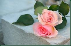 Flores_250054233_14