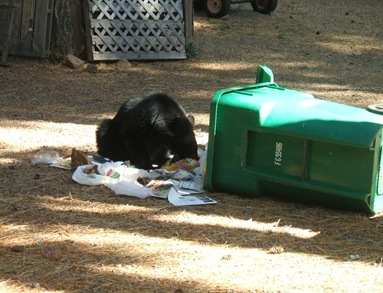 '10 Oct_Backyard bear 002