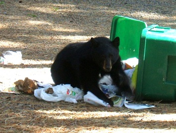 '10 Oct_Backyard bear 001