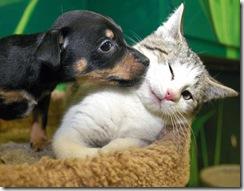 dogcat_animals____up_for_adoption