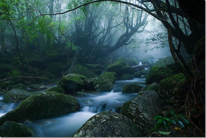 Monoke Forest Yakushima Island Japan caseyyee at flickr