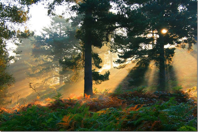 Autumn Mists on Cannock Chase by John Godley