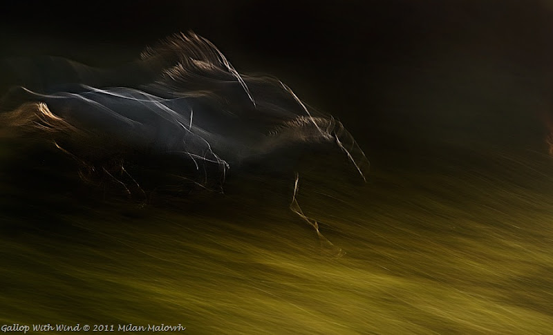 Gallop with Wind by Milan Malowrh