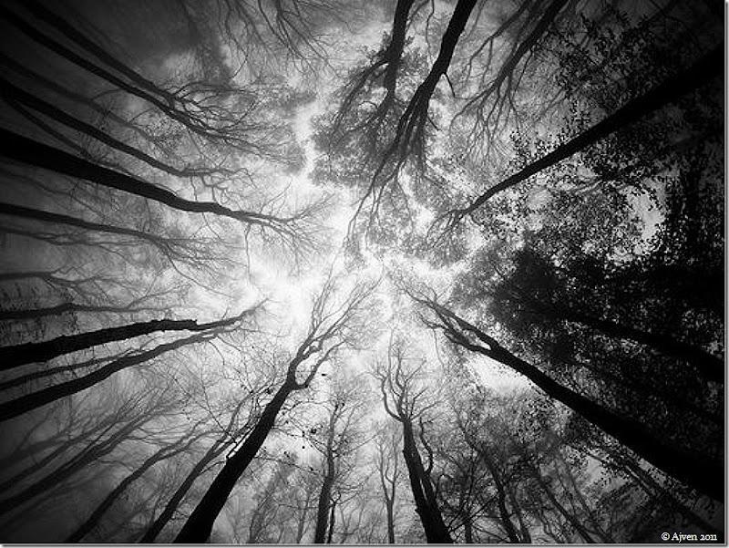 Trees 2010-07-02_5D_7407_Artem_Sapegin (1)