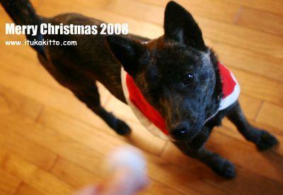 メリークリスマス 2008