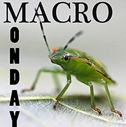 macromonday